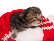 Neonate kitten Stock Photography