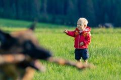 Neonato che gioca con il cane sul prato verde fotografia stock libera da diritti