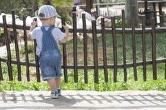 Neonato che guarda i fenicotteri in zoo Fotografie Stock Libere da Diritti
