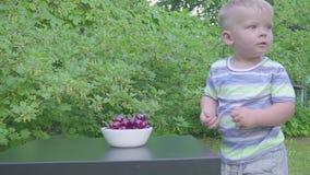Neonato che mangia le ciliege in giardino Ciliege in un piatto su una tavola archivi video