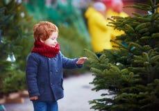 Neonato felice sveglio che sceglie l'albero di Natale per le vacanze invernali al mercato stagionale immagine stock
