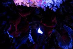 Neonbladeren van bloemen stock afbeelding