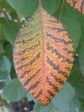Neonsebrablad royaltyfria foton