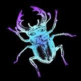 Neonskizze - farbiger Käfer Stockbild