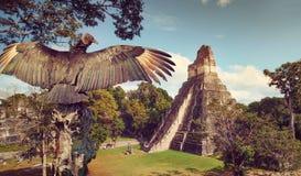 Neophron, der die alten Ruinen der Mayastadt betrachtet lizenzfreie stockfotografie