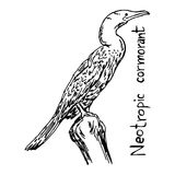 Neotropic cormorant - vector illustration sketch hand drawn with Stock Photos