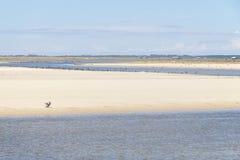 Neotropic Cormorants on the beach Stock Photo