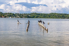 Neotropic Cormorants in a pier - Flores, Peten, Guatemala Stock Photos