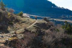 Nepalês Sherpa que caminha a vila da fuga de montanha Homem novo que escala o viajante carregado Ásia norte bonita da trilha dos  fotos de stock royalty free