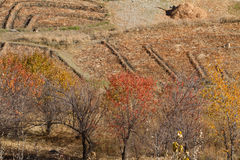 Nepal autumn landscape Stock Photography