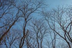 Nepal - Bezlistny drzewo Zdjęcie Stock