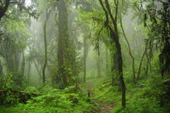Nepal dżungla obrazy royalty free