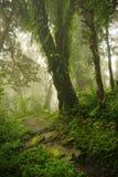 Nepal dżungla Obraz Royalty Free