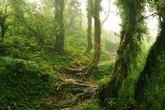 Nepal dżungla Fotografia Royalty Free