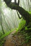 Nepal dżungla Zdjęcia Royalty Free