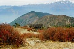 Nepal, de purpere struiken. Stock Foto