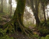 Nepal djungel Royaltyfria Foton