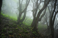 Nepal-Dschungel Lizenzfreie Stockfotografie