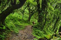 Nepal-Dschungel Stockbilder