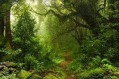 Nepal-Dschungel