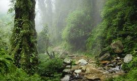 Nepal-Dschungel Stockbild