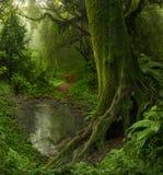Nepal-Dschungel Lizenzfreies Stockbild
