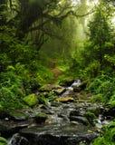 Nepal-Dschungel Lizenzfreies Stockfoto