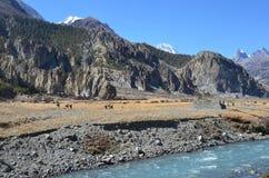 Nepal, emigrando en el Himalaya Paisaje de la montaña imagen de archivo
