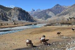 Nepal, emigrando en el Himalaya Paisaje de la montaña foto de archivo