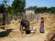 Nepal farm life Royalty Free Stock Images