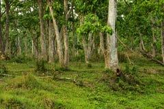 Nepal, het Nationale Park van Chitwan Bos royalty-vrije stock foto's