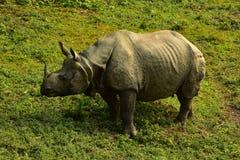 Nepal, het Nationale Park van Chitwan Rhinio stock foto