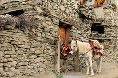 Nepal Himalaya mountains. Trek in Nepal. Annapurna cirkut trek. Caravan of horses supplying inaccessible villages in the Himalaya stock image