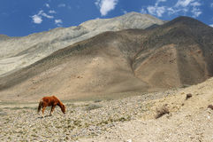 Nepal, Himalaya mountains - Upper mustang Royalty Free Stock Photos