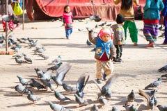 Nepal - 3 Januari 2017:: Nepalijong geitje het spelen met pegion in Boud Stock Fotografie