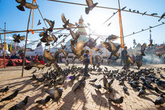 Nepal - 3 January 2017 :: pigeons at Boudhanath Stupa landmark o Stock Image