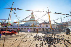 Nepal - 3 January 2017 :: pigeons at Boudhanath Stupa landmark o Stock Images