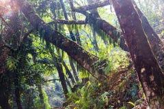 Nepal jungle Royalty Free Stock Image