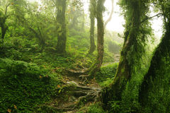 Nepal Jungle. Subtropical jungle of Nepal around the Annapurna Royalty Free Stock Photography