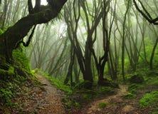 Nepal Jungle. Subtropical jungle of Nepal around the Annapurna Stock Photo