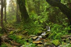 Nepal jungle. Subtropical jungle around Annapurna Nepal Stock Photos