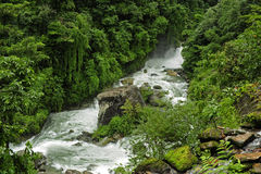 Nepal jungle Royalty Free Stock Image