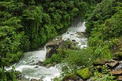 Nepal jungle. Subtropical jungle around Annapurna Nepal Royalty Free Stock Image