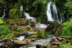 Nepal jungle. Subtropical jungle around Annapurna Nepal Royalty Free Stock Photos