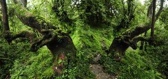 Nepal jungle royalty free stock photos