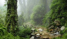 Nepal Jungle stock image