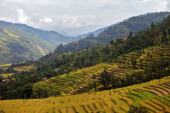 Nepal Life Stock Images