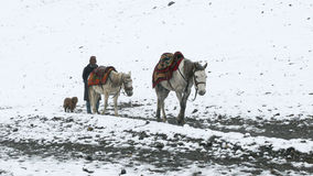 Nepal man with horses and dog - snowy weather in Thorong High Camp, Nepal Royalty Free Stock Image
