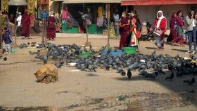 Nepal - November 11, 2018: mensen die duifvogels voeden dichtbij Boudhanath-Tempel in Katmandu stock videobeelden