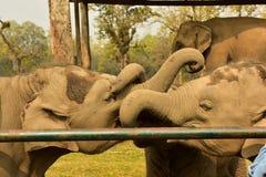 Nepal, parque nacional de Chitwan, o centro para elefantes Foto de Stock Royalty Free